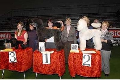 1 . Schweizer Meisterschaft in Genf 2008 Diplom