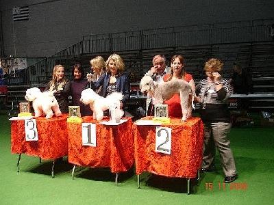 Schweizerische Hundecoiffeusen Meisterschaft vom 15.Nov 2008 , 2 Rang in der Meisterklasse :-)