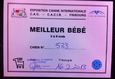 Welpensiegertitel 16 Feb 2013 in Fribourg
